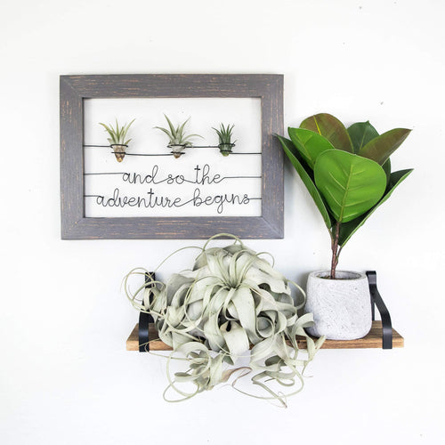 And So The Adventure Begins • Air Plant Holder - rustandglam