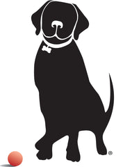 Big Wags: Give your dog the Best & help one in Need