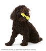 Non-Toxic Chew Proof Dog Toy Set