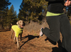 Climate Changer Fleece Dog Coat