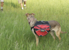 Cascade Dog Backpack