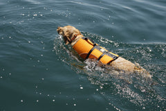 Dog Life Jacket K9 Float Coat