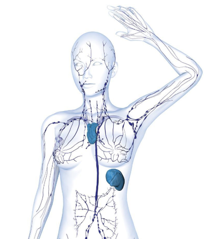 Body diagram highlighting the lymphatic system