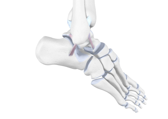 Extension Of Ankle Ligaments