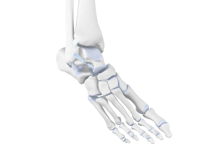 Supination Trauma: Rolling your Ankle