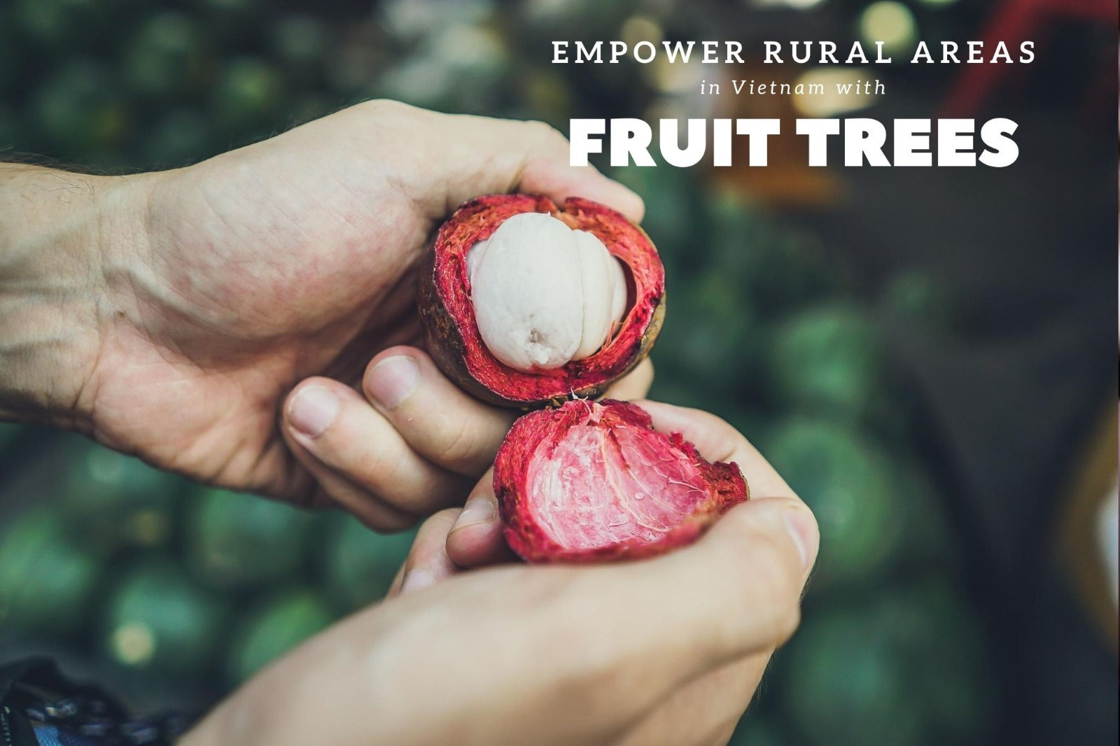 How permaculture can empower rural areas! | Impact Berry