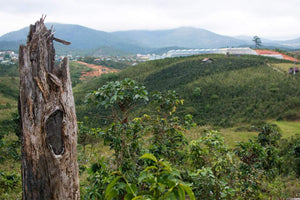 Deforestation in Vietnam | Impact Berry