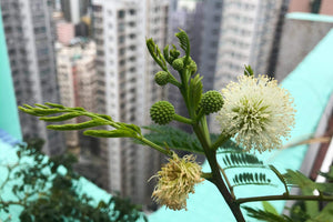 urban farming green thumb impact berry hong kong