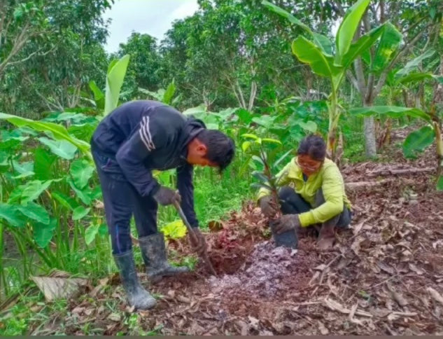 Fruit Tree Planting Fighting Deforestation Vietnam