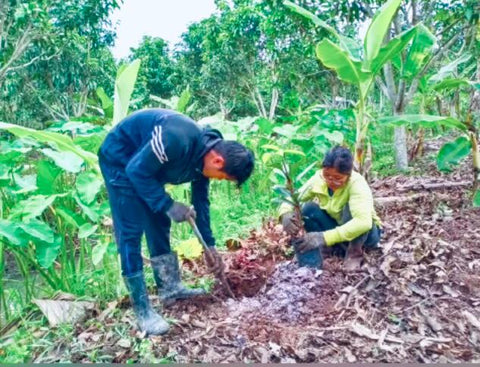 How permaculture can empower rural areas