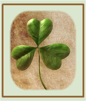 shamrock for green collection