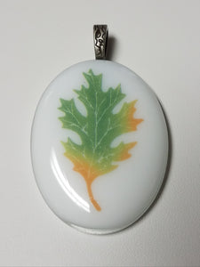 Fall turning colors oak leaf on white glass