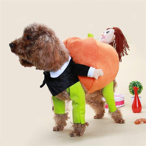 Funny Teddy pet dog lift pumpkin turned villain hold a Santa suit with pumpkin Puppy lift gift Pet Christmas clothing