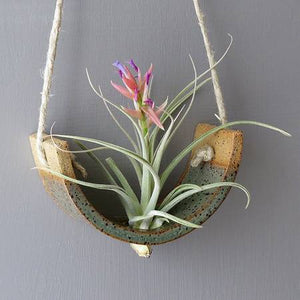 Small Gunmetal Green Hanging Air Plant Cradle - Bestowed Shop