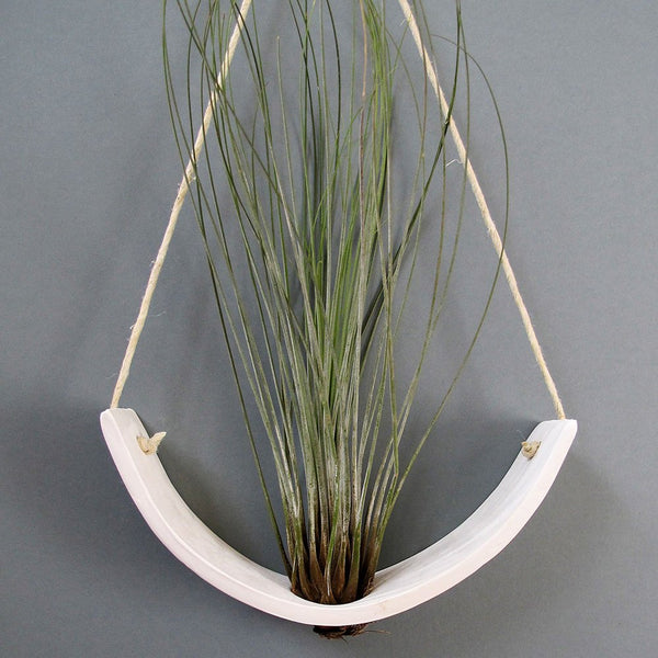 White Earthenware Hanging Ceramic Air Plant Cradle - Bestowed Shop