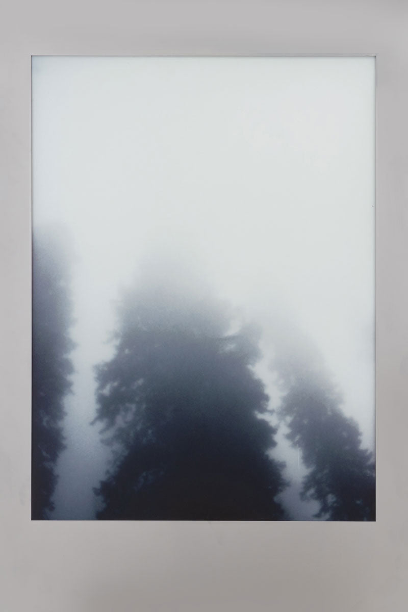 Aviation Lightbox Frames: Forest 1