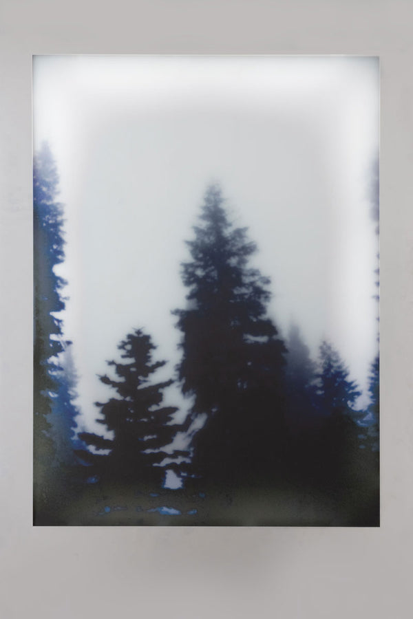 Aviation Lightbox Frames: Forest 2