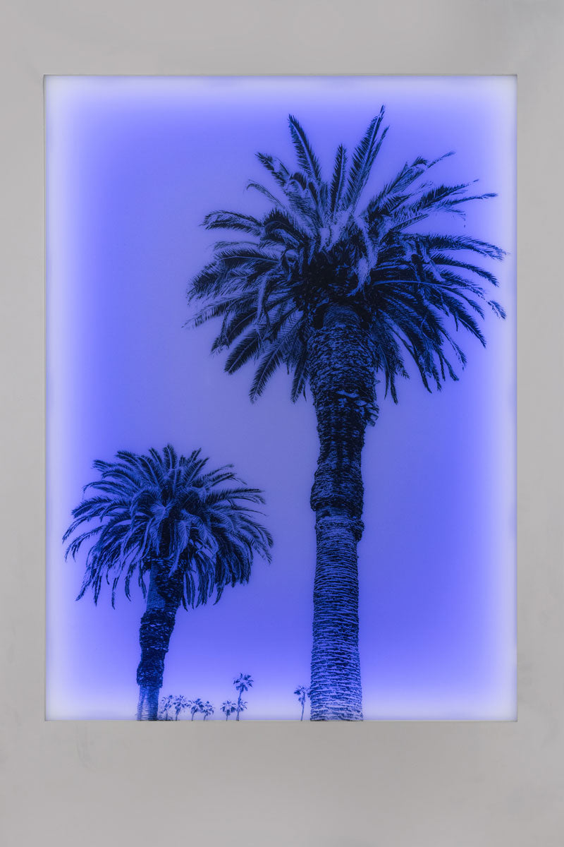 Aviation Lightbox Frames: Palm 2