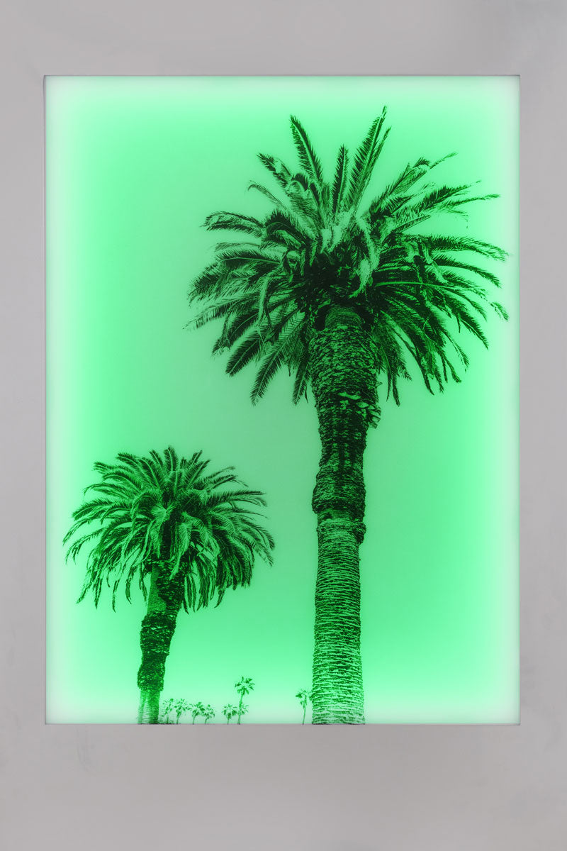 Aviation Lightbox Frames: Palm 1