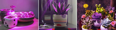cultivo led indoor