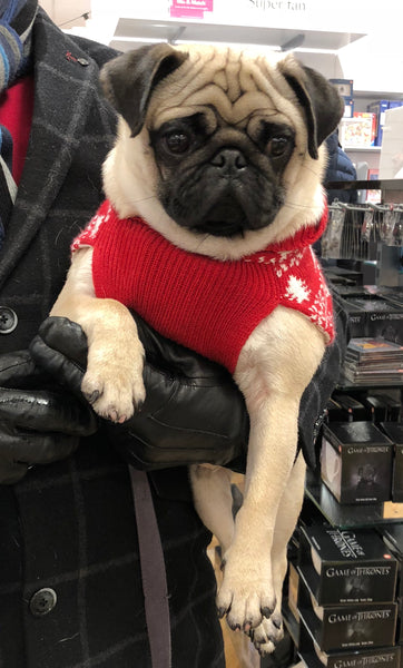 Thinking of buying a Pug?