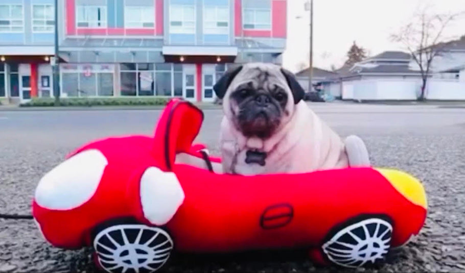 Pug Swag is excited for the release of The Fast And The Furious 9!!