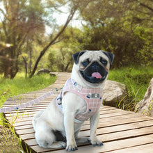 Load image into Gallery viewer, pug swag pink square harness
