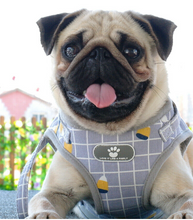 Load image into Gallery viewer, pug swag grey harness with square print