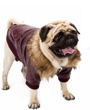 Load image into Gallery viewer, pug swag pug dog aviator jacket / coat with faux fur trim / lining with leather look. tight-fitted. for male or female pugs. comes in s, m, l, xl.