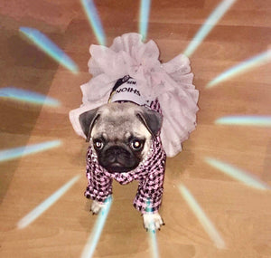 pug swag small dog dress the parisian coco chanel style tweed pink with black and lace trim, elegant and fun for pug dog