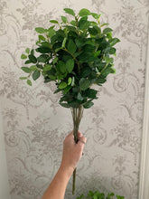 Load image into Gallery viewer, Pittosporum Bunch, Foilage
