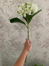 Load image into Gallery viewer, Hydrangea Lace Cap Stem ... White
