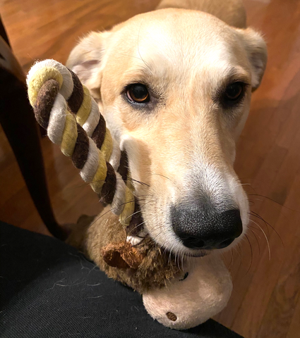 Lilly and her monkey