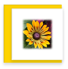 Brown Eyed Susan Mini Greeting Card with Envelope, Mini Note Card