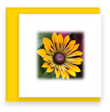 Beautiful Morning Mini Square Greeting Cards Assorted set Brown Eyed Susan