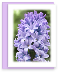 Hyacinth Greeting Card Garden Party Blooms Note Card Single A2 Card with Envelope