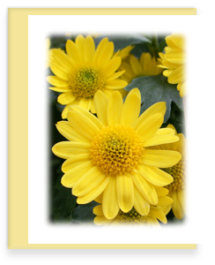 Yellow Mum Greeting Card Garden Party Blooms Note Card Single A2 Card with Envelope