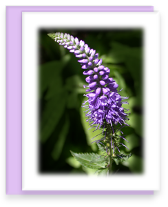 Purple Veronica Greeting Card Garden Party Blooms Note Card Single A2 Card with Envelope
