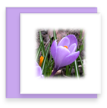 Crocus Mini Greeting Card with Envelope, Mini Note Card