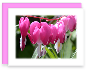 Bleeding Heart Greeting Card Garden Party Blooms Note Card Single A2 Card with Envelope