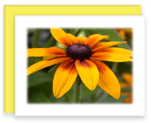 Brown Eyed Susan Greeting Cards Garden Party Blooms Note Card Single A2 Card with Envelope