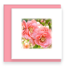 Flowering Quince Mini Greeting Card with Envelope, Mini Note Card