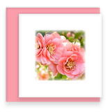 Morning Song Garden Party Blooms Mini Greeting Cards Flowering Quince Assorted Flowers