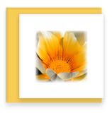 Gazania Garden Party Blooms Mini Square Greeting Card Assorted