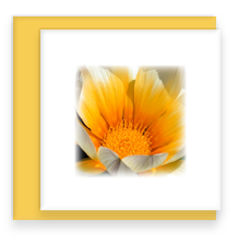 Orange Gazania Mini Greeting Card with Envelope, Mini Note Card