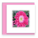 Oh Happy Day Garden Party Blooms Assorted Set of Mini Greeting Cards Gerber Daisy