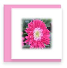 Pink Daisy Mini Greeting Card with Envelope, Mini Note Card