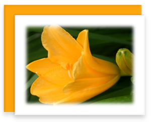 Daylily Greeting Card Garden Party Blooms Note Card Single A2 Card with Envelope