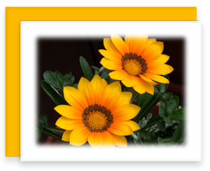 Orange Gazania Greeting Card Garden Party Blooms Note Card Single A2 Card with Envelope