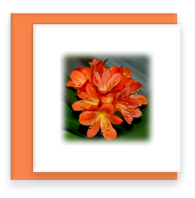 Tropical Flame Lily Greeting Card with Envelope, Mini Note Card